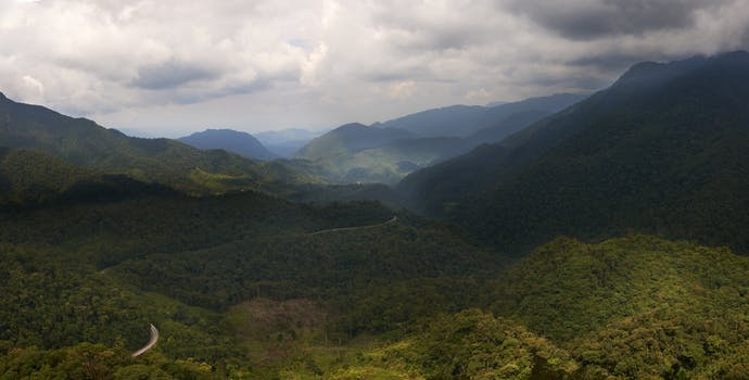 Alto Mayo Protected Forest