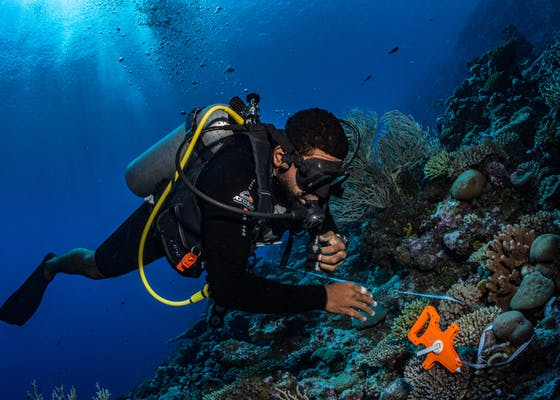 Fiji Department of Fisheries Scientist Volau Tiko lays a transect tape while surveying for sea cucumbers and giant clams