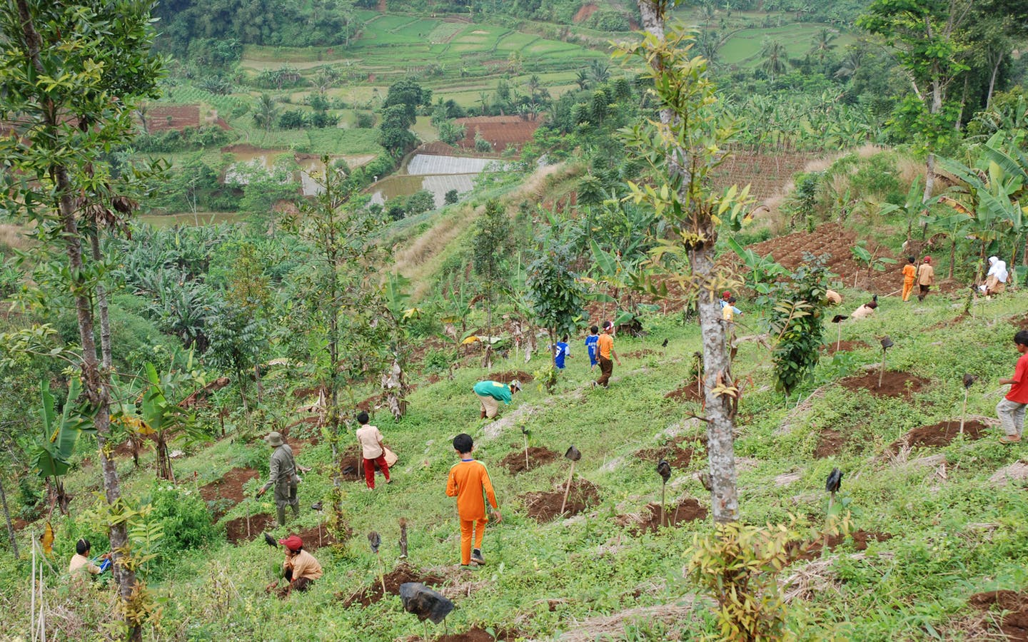 Daikin Industries Ltd is providing support to the Green Wall Project to reforest the degraded areas in Indonesia