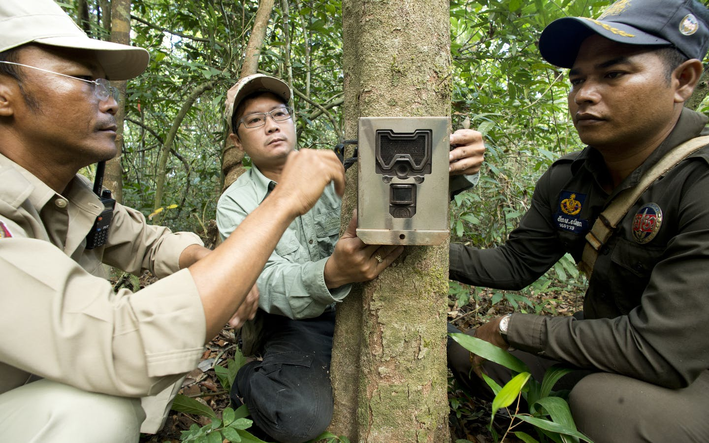 Rangers set up camera traps in the forest to record animal species within the Central Cardamom Protected Forest.