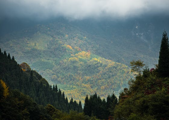 Anzihe Protected Area, Sichuan, China.