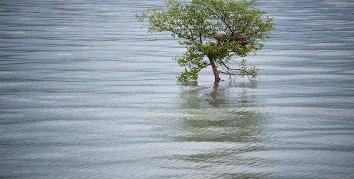 Mangrove living in Zhanjiang