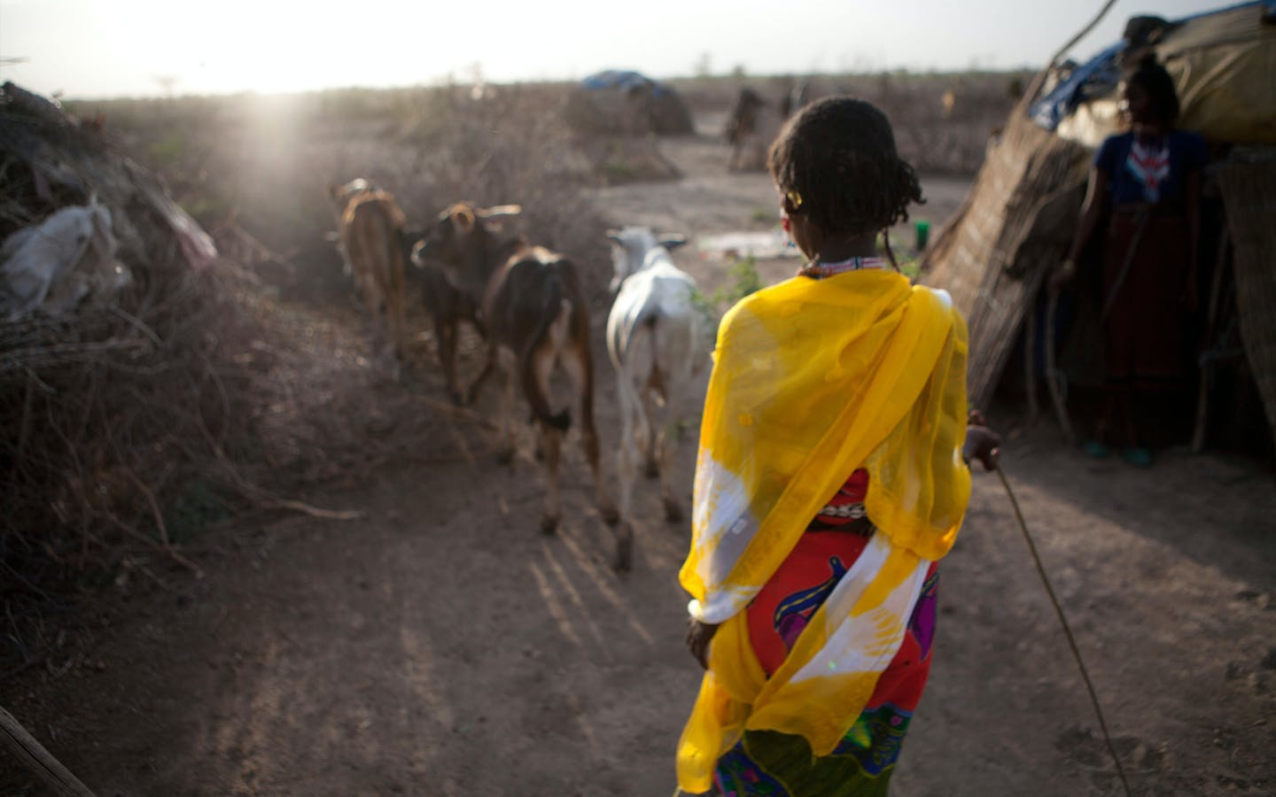 Ethiopian nomads with their cattle