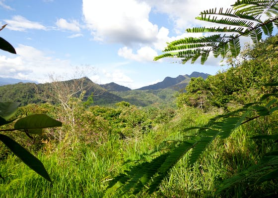 Mountain and forest in San Martin, Alto Mayo Region, Peru