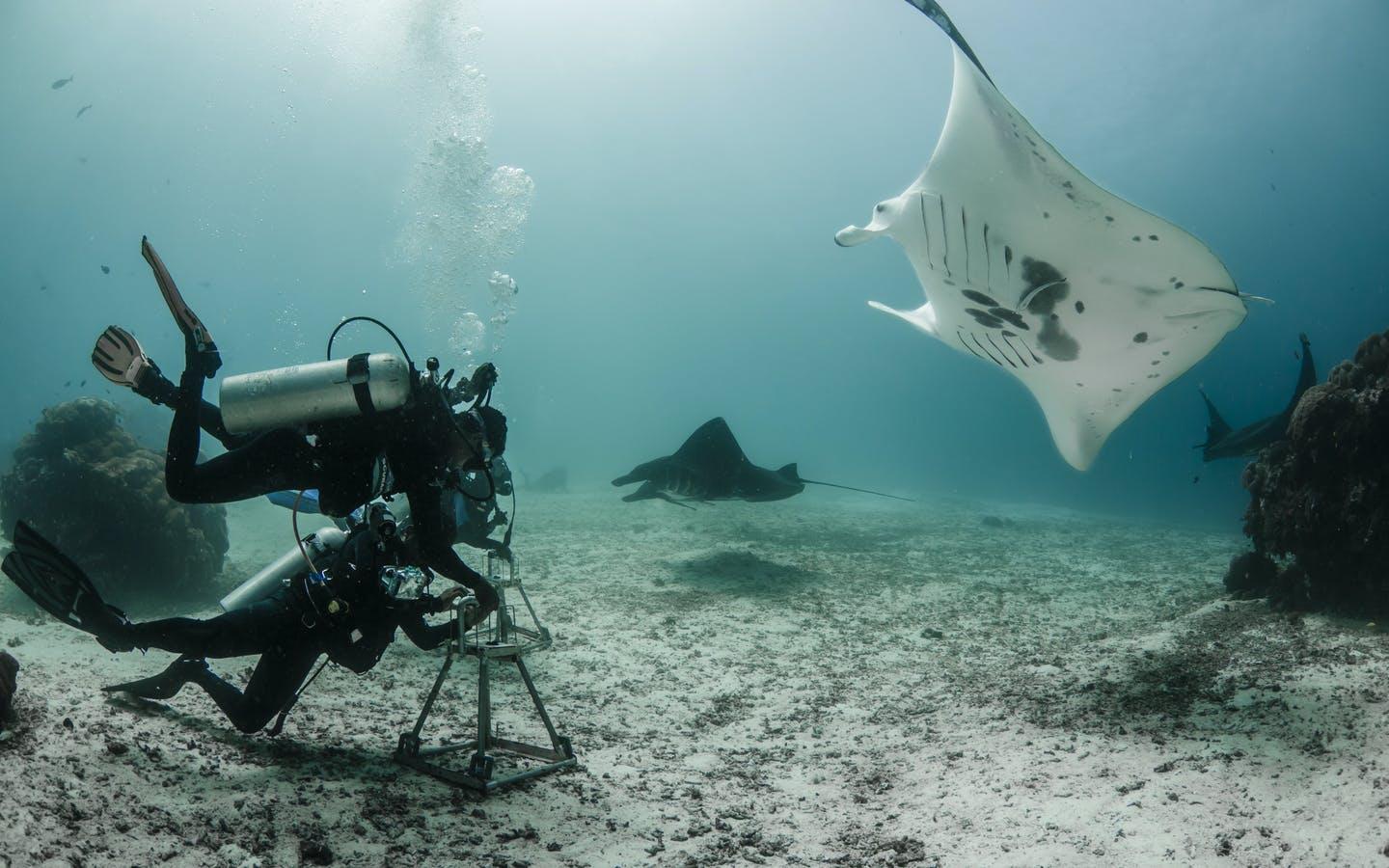 Conservation International Gam team installing a manta ID camera.