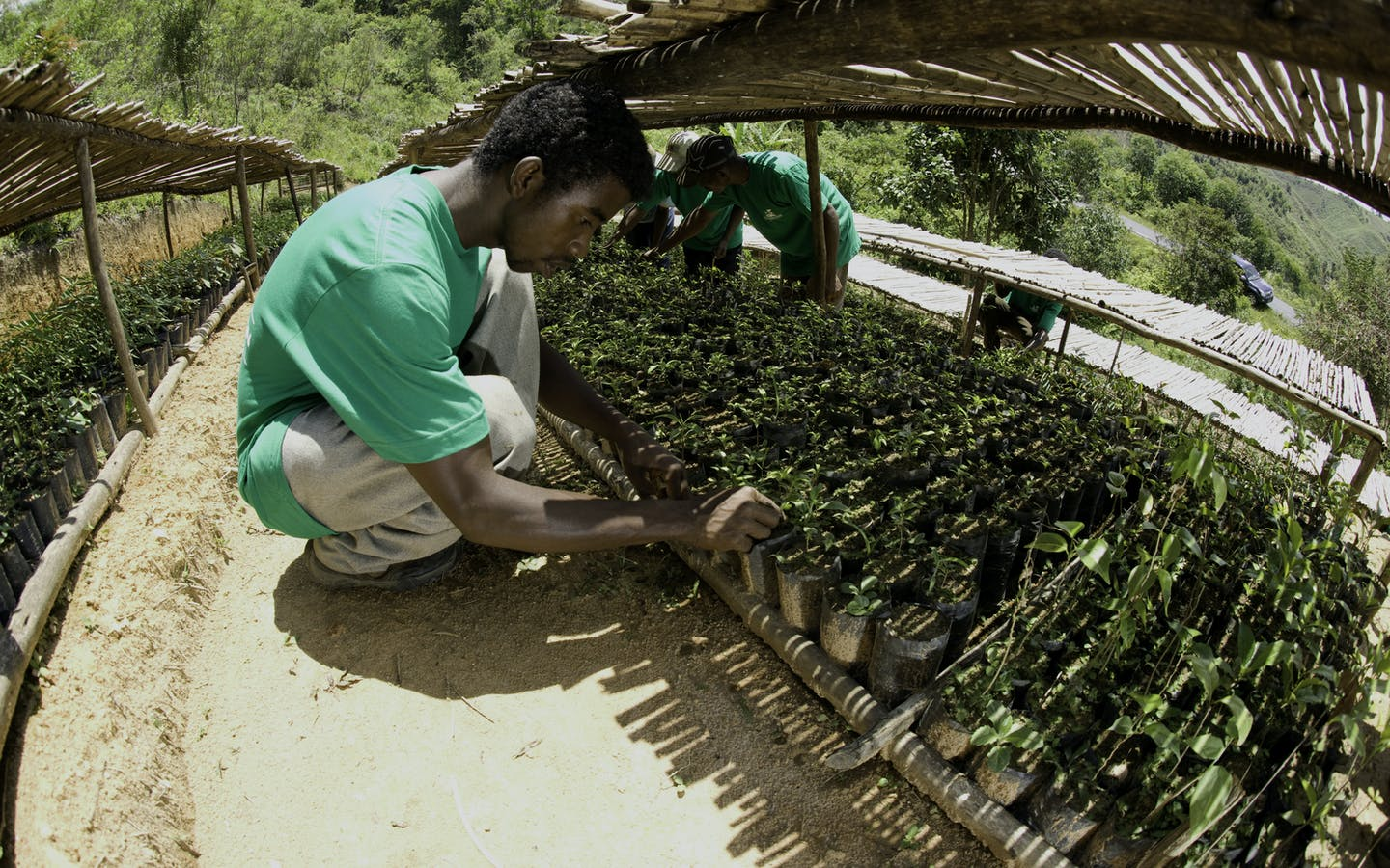 A tree nursery in Madagascar