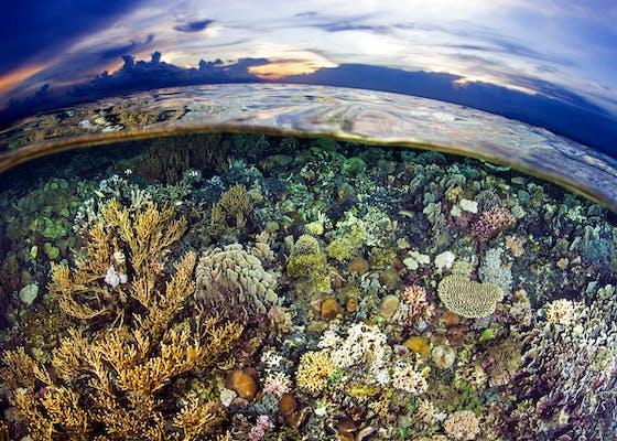 Atauro Island, Timor Leste