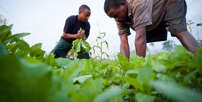 Farmers in Tanzania