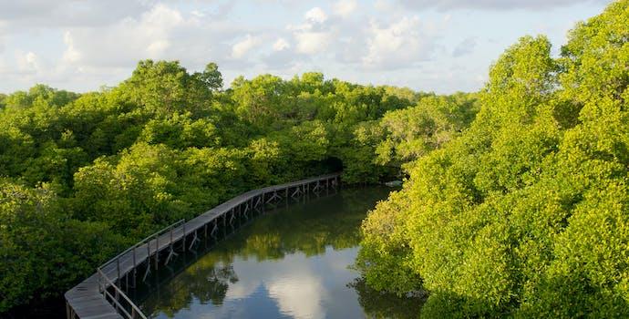 The mangrove center, mangrove restoration site in Denpasar, Bali.