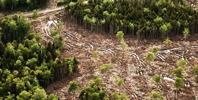 Aerial view of clear cut portion of forest.