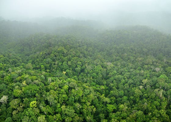 The mountains and extensive intact forests of Southeastern Suriname are often shrouded in clouds, and it is one of the wettest areas of the country.