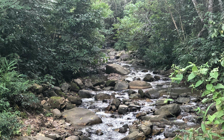 Rocky stream in Alto Mayo, Peru