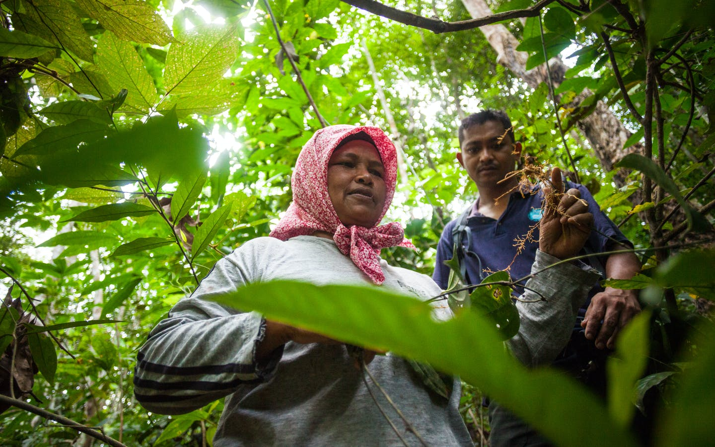 Siti Normah holds up a medicinal root collected in a nearby forest.