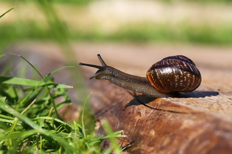 Closeup view of a snail sitting on wooden plank