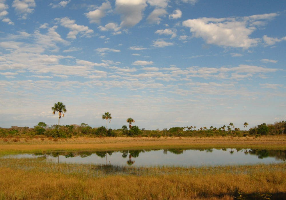 Lake and palm swamps on the upper Peruaçu River in northern Minas Gerais, Brazil.