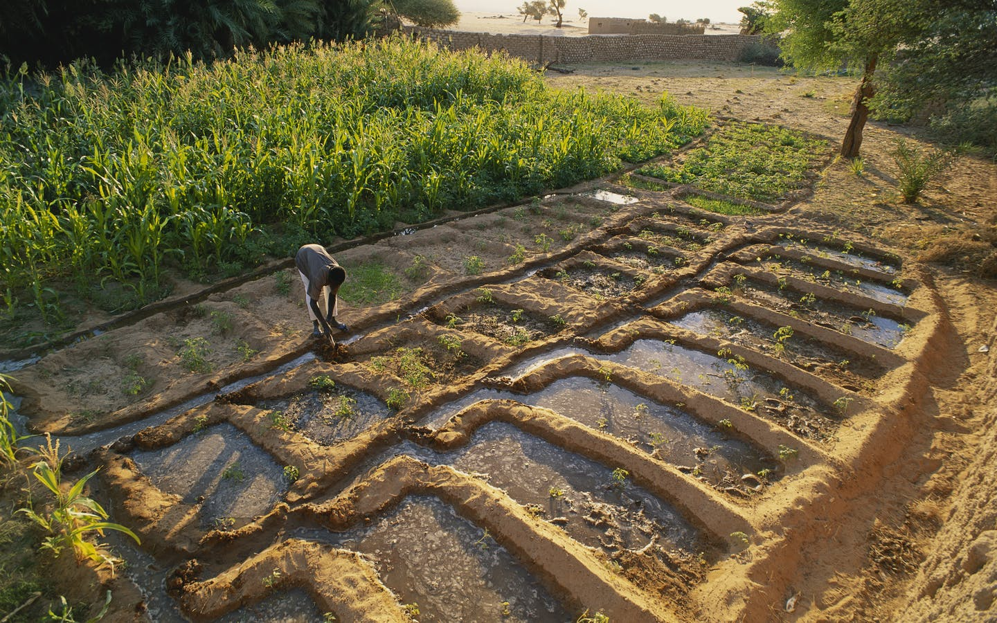"Abdulai Galiou working in his father's garden in Chirfa. The garden is watered by a 5m deep well, and the water brought up by a traditional fulcrum weight, or ""guadara"" in Toubou language. He grows corn, millet, meal, tomatoes, and zucchini for his family, and also for sale to visitors."