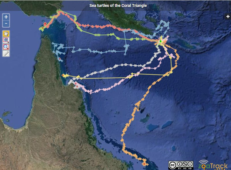 sea-turtle-paths