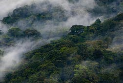 Clouds rise through Bwindi Impenetrable National Park, Uganda