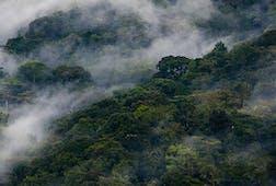 Clouds rise through Bwindi Impenetrable National Park, Uganda