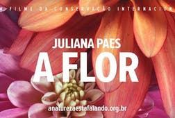 Juliana Paes A Flor