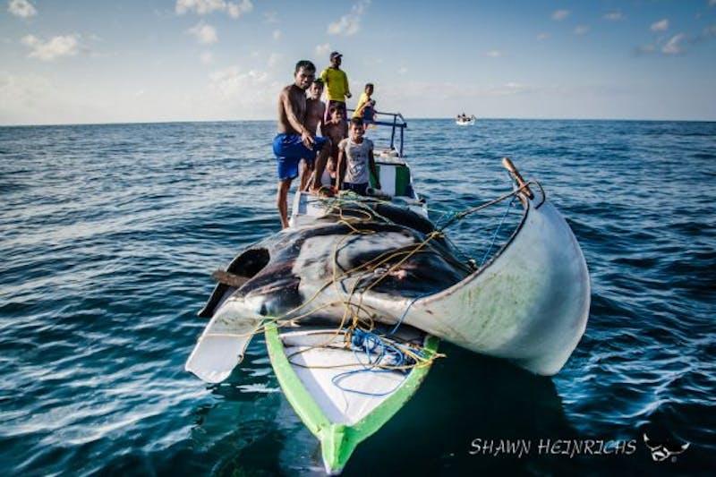 Manta ray fishing