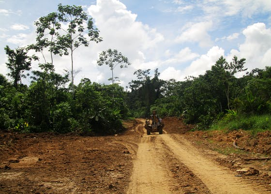 A logging road in Sepahua, Peru