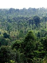https://ciorg.imgix.net/images/default-source/non-vault-images/daikin-indonesia-trees-condition?&auto=compress&auto=format&fit=crop