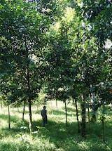 https://ciorg.imgix.net/images/default-source/non-vault-images/daikin-monitoring-forest?&auto=compress&auto=format&fit=crop
