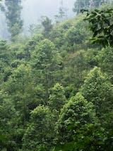 https://ciorg.imgix.net/images/default-source/non-vault-images/daikin_2016-8_indonesia-2?&auto=compress&auto=format&fit=crop