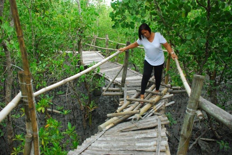 Silonay Mangrove Ecopark in Oriental Mindoro, Philippines