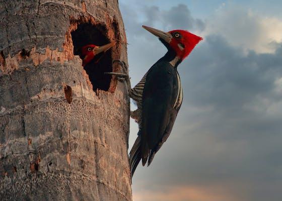 woodpecker-g3c73e9857_1920