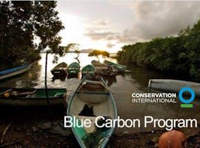 https://ciorg.imgix.net/images/default-source/publication-preview-images/blue-carbon?&auto=compress&auto=format&fit=crop&w=290&h=215