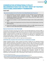 https://ciorg.imgix.net/images/default-source/publication-preview-images/conservation-internationals-policy-recommendations-for-the-first-draft-of-the-post-2020-global-biodiversity-framework-thumbnail?&auto=compress&auto=format&fit=crop