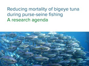 https://ciorg.imgix.net/images/default-source/publication-preview-images/reducing-the-fishing-mortality-of-bigeye-tuna-during-purse-seine-fishing?&auto=compress&auto=format&fit=crop&w=290&h=215